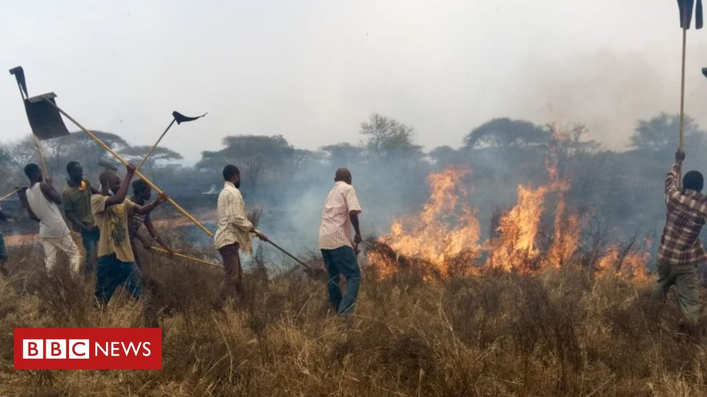 Kenya's Tsavo National Park: Fire put out after two days