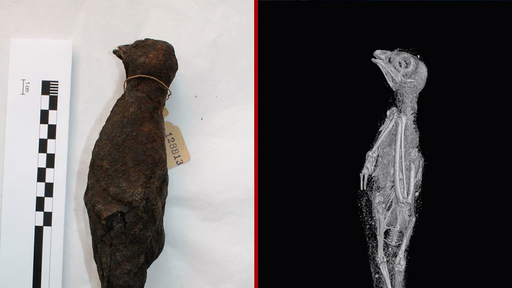 Ancient Egypt: Mummified animals 'digitally unwrapped' in 3D scans