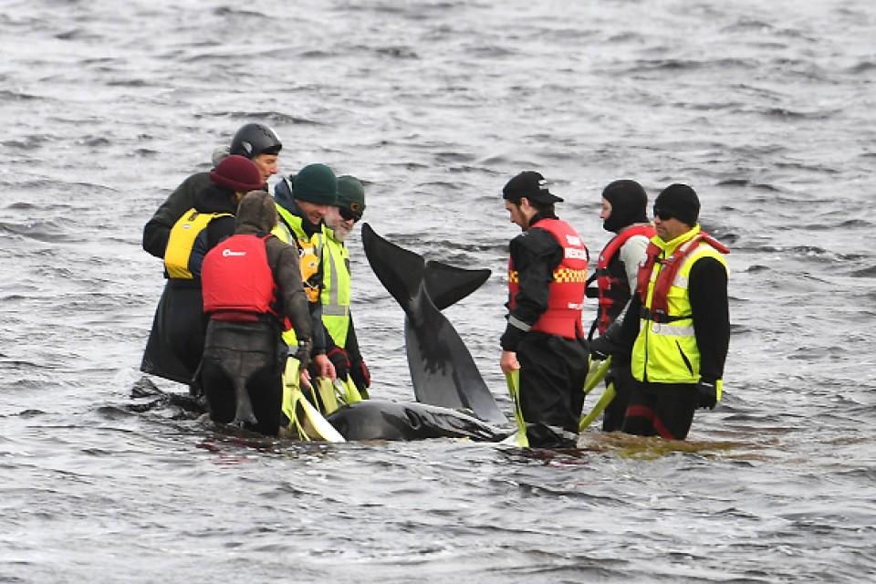 380 whales dead in record mass stranding off Australia's Tasmania