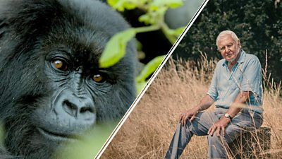 Attenborough and the special moment fuelling his hope