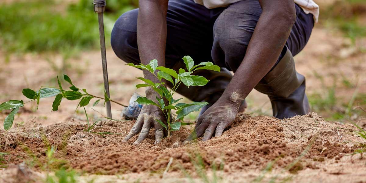 Planting 50 billion trees across Africa for wealth creation