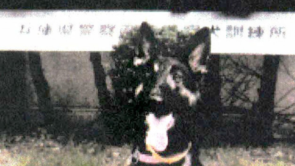 Runaway police dog found after search on western Japan mountain