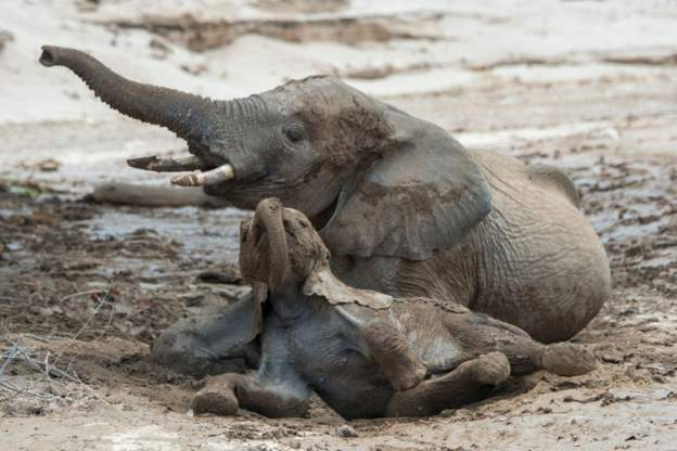 Namibia auctions 170 elephants due to drought