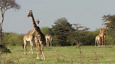 Nashulai: The community trying to conserve Kenya's wildlife