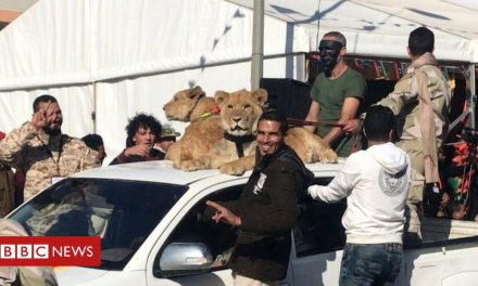 How six brothers – and their lions – terrorised a Libyan town