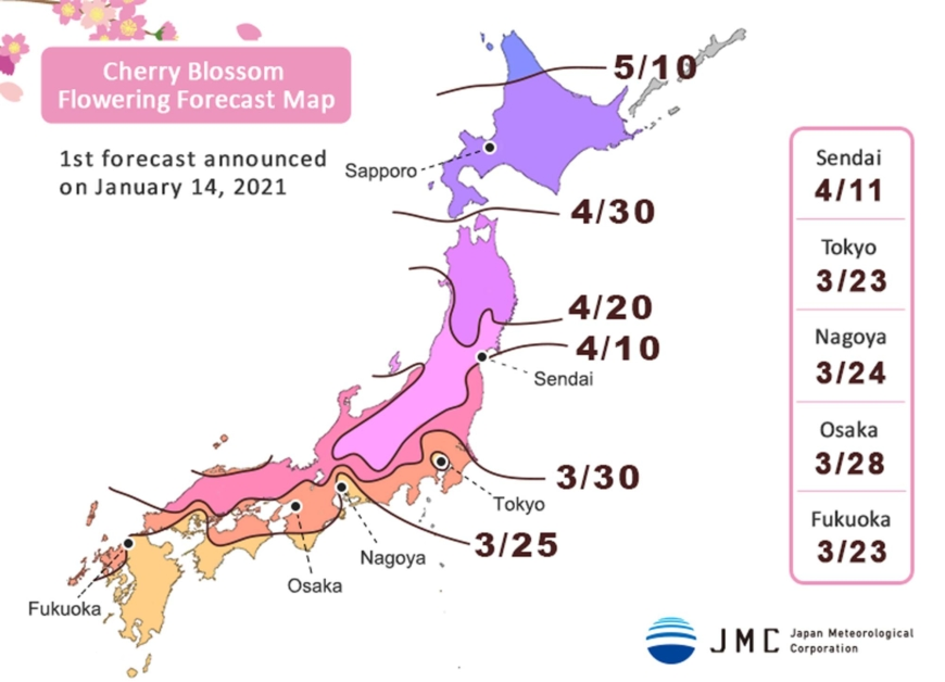 Cherry blossom to bloom three days earlier than average this year in Tokyo