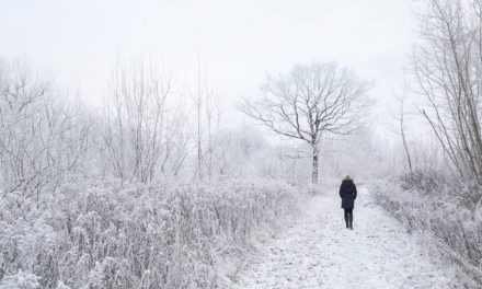 'Wintering': A memoir of hope for embracing dark and lonely times