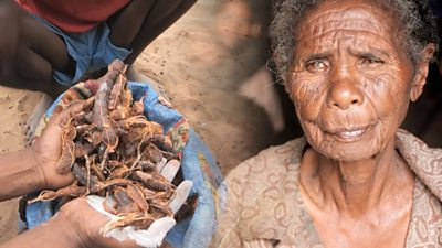 Madagascar: UN's WFP warns of a humanitarian crisis due to drought and Covid-19
