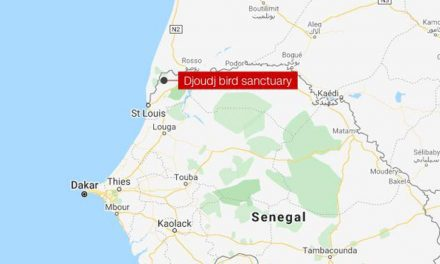 More than 700 dead pelicans found in Senegal World Heritage site