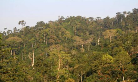 Why global manufacturing firms oppose mining in Ghana's Atewa Forest