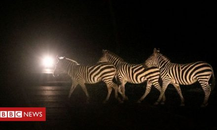 Africa's week in pictures: 12-18 March 2021