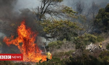 Table Mountain fire 'burns out of control' in Cape Town
