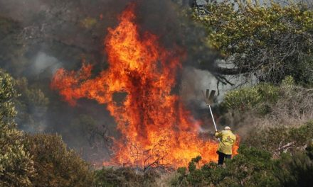 Cape Town, South Africa: As Table Mountain fires continue to rage one man is detained
