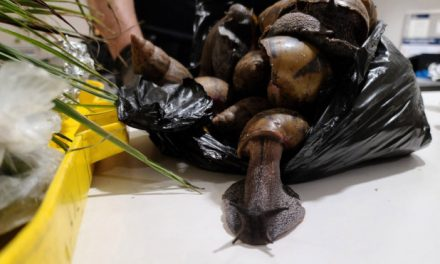Man with snails, 'prekese' in luggage from Ghana detained at JFK Airport