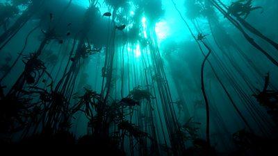 Saving the kelp forest that stars in My Octopus Teacher