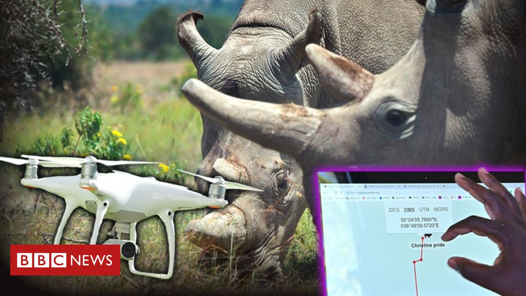 Drones and live-streams: How tech is changing conservation