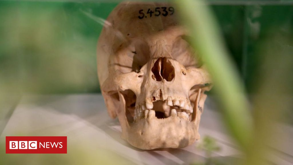 Germany officially recognises colonial-era Namibia genocide
