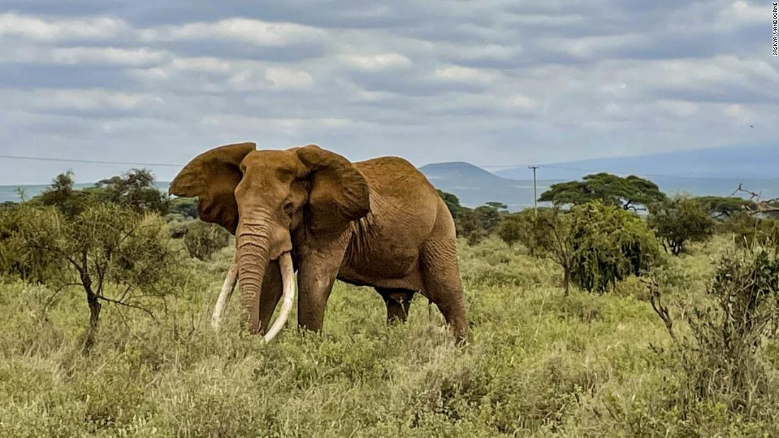 Kenya conducts a wildlife census mid-pandemic