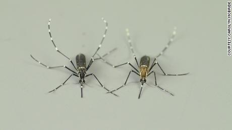 Understanding how mosquitoes smell humans could save thousands of human lives