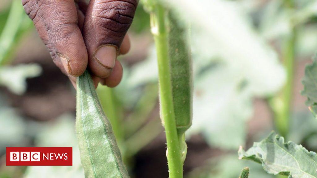 Tigray conflict: 'We have no food, we face death'