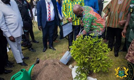 Ghana's Green project targets planting over 5 million trees
