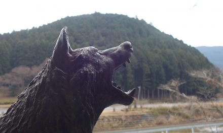 In search of Japan's lost wolves: Enduring legacy