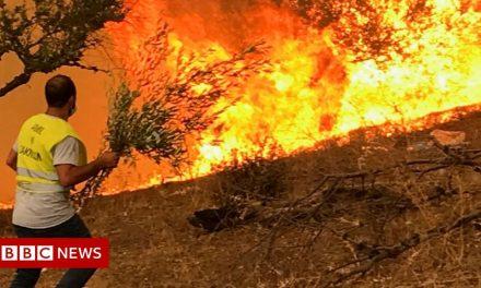 Algeria's desperate wildfire fight: Buckets and branches
